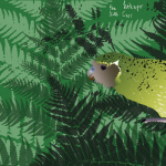 Kate Carr - The Kakapo